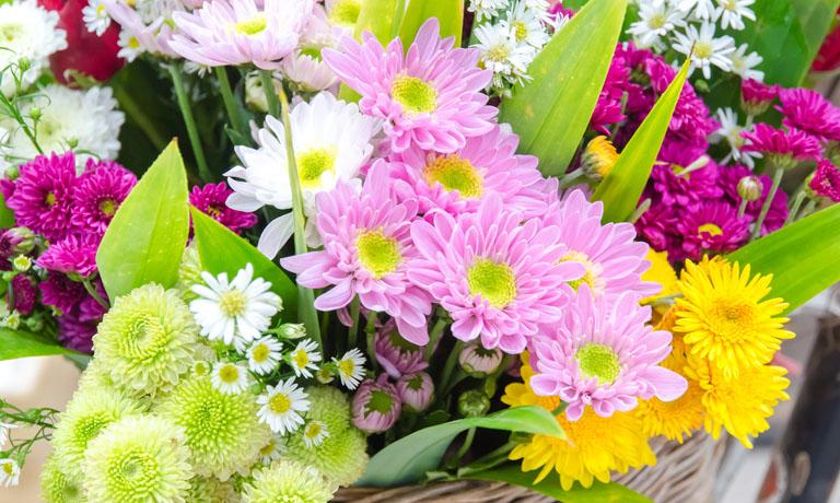 Blumen für die Seele - ein wunderschöner Farbrausch